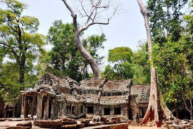 Angkor_TaProhm