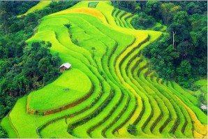 Trek Hoang Su Phi Terraced Fields & Homestay