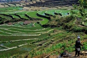 Kentung_rice_terraces