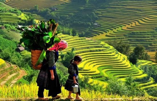 Muong Hoa Valley in Vietnam