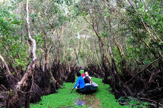 Tra Su forest in Mekong Delta