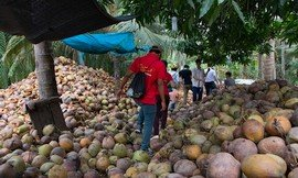 Ben-Tre-coconut-workshop-Mekong-Delta-tour-Vietnam