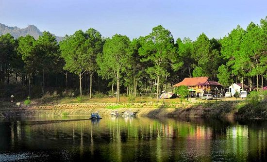 Pine Forest at Ang Village, Moc Chau, Vietnam
