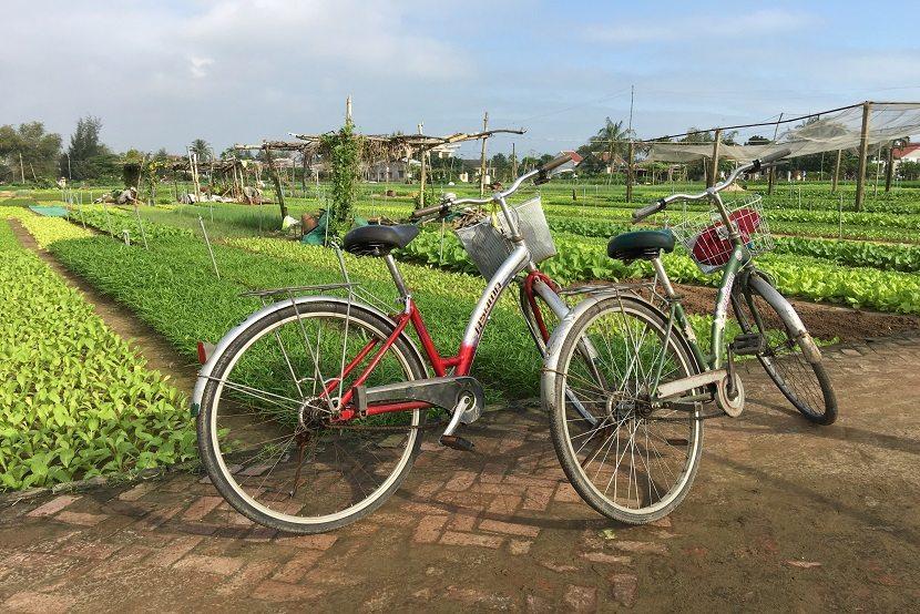 Tra Que village bicycle