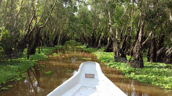 Tra Su Cajuput forest in Mekong Delta