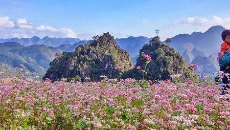 Tam Giac Mac Flower 1
