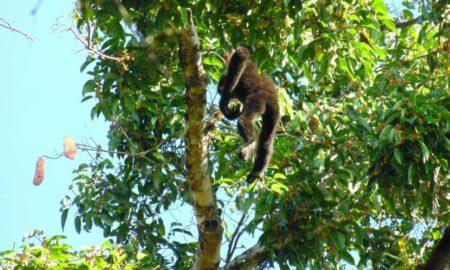 Green Hope Lodge Wildlife in Cat Tien park