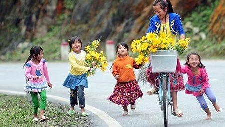 charming flower seasons in Moc Chau